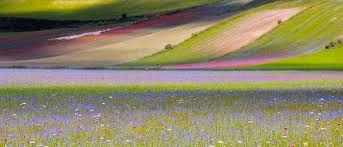 campi lenticchie umbre - Cerca con Google