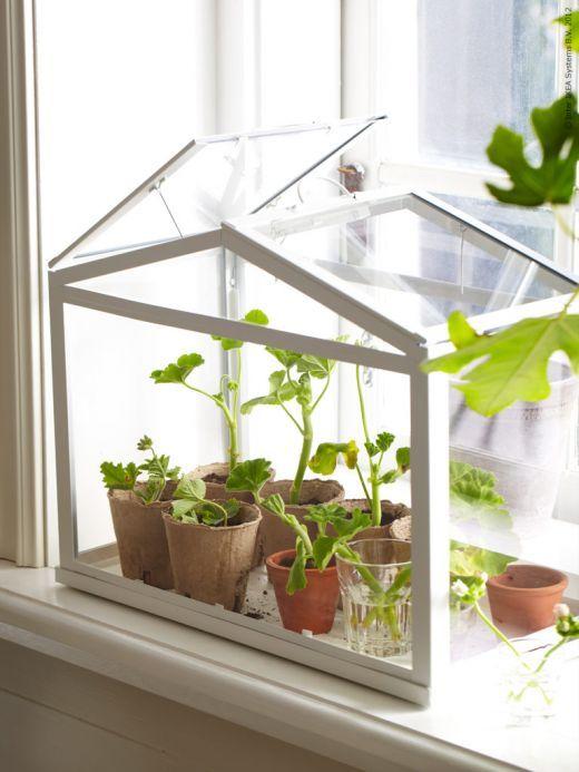 spring ventana de la bacha de la cocina terrariummmm con ranitas ...