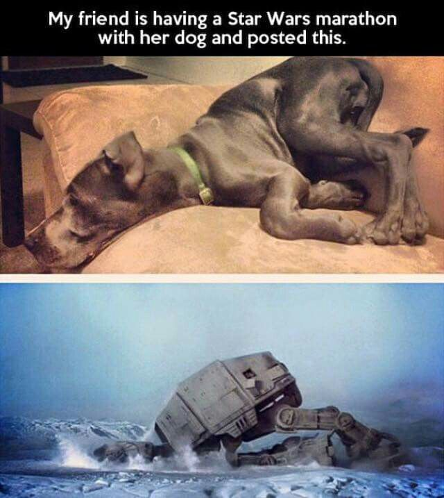 Star Wars Memes Having A Sw Marathon With Your Dog Star Wars Humor Star Wars Watch Star Wars Facts