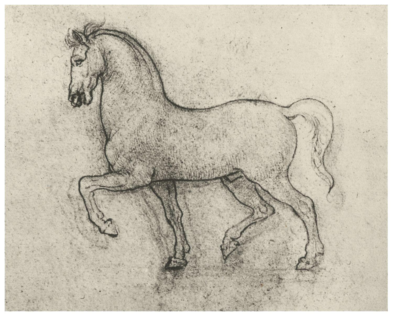 Contour Line Drawing Leonardo Da Vinci : Leonardo da vinci horse drawings google search vintage images