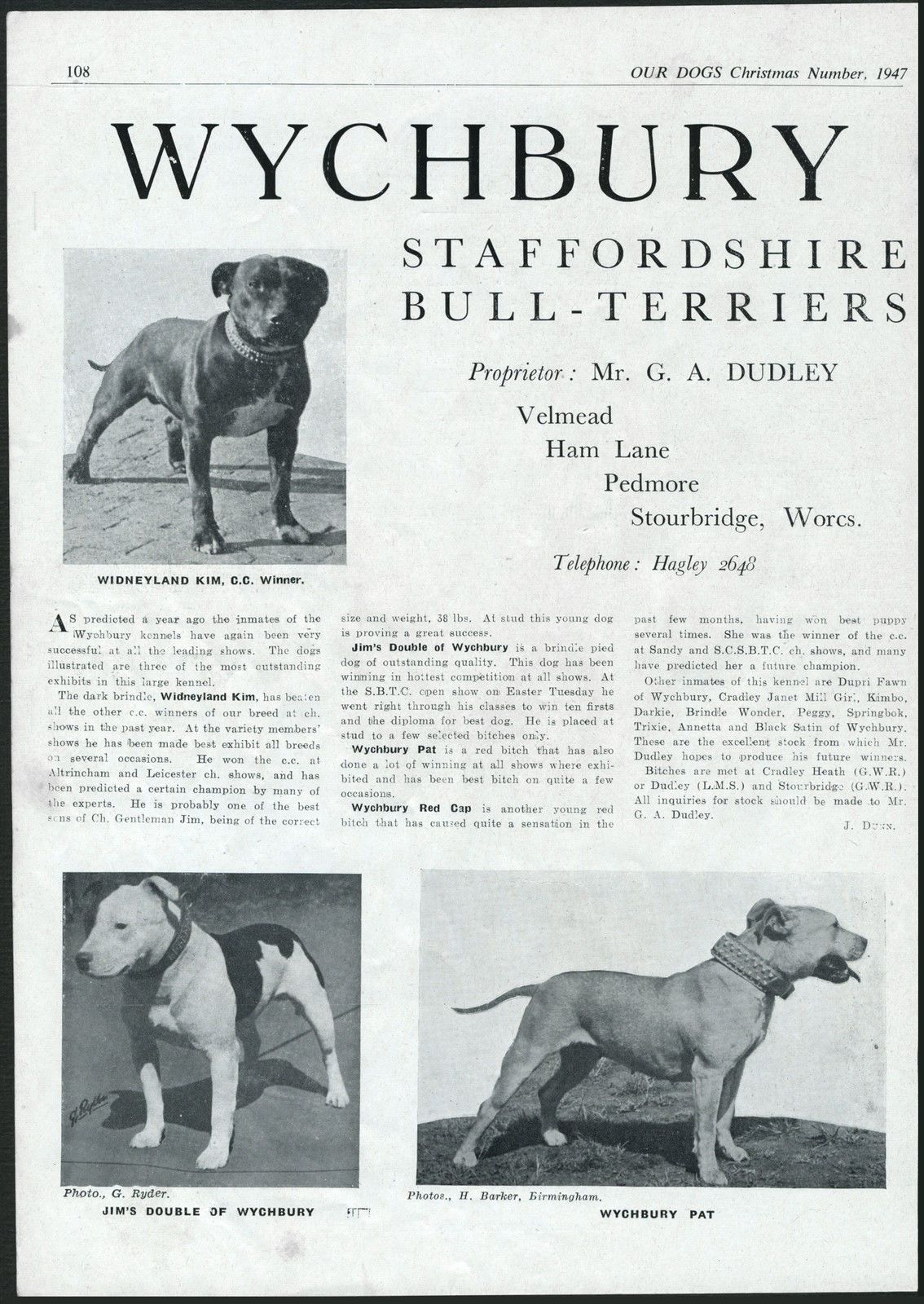 STAFFORDSHIRE BULL TERRIER OUR DOGS VINTAGE 1949 ...  |American Pit Bull Terrier Vintage