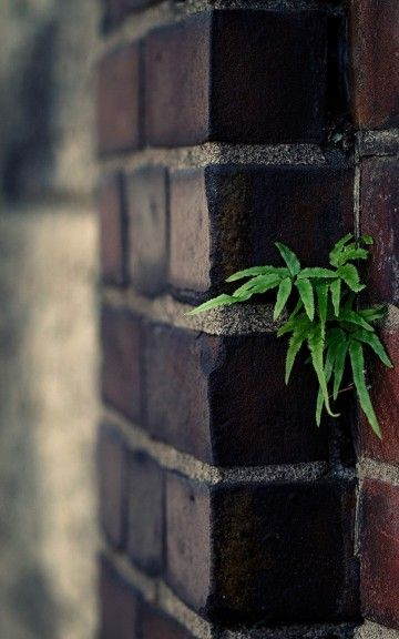 Depth Of Field Plant On Brick Wall Android Wallpaper