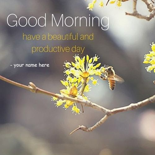 have a beautiful and productive day good morning quotes