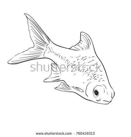 Sketch Of Aquarium Fish Hand Drawn Vector Illustration Sketch
