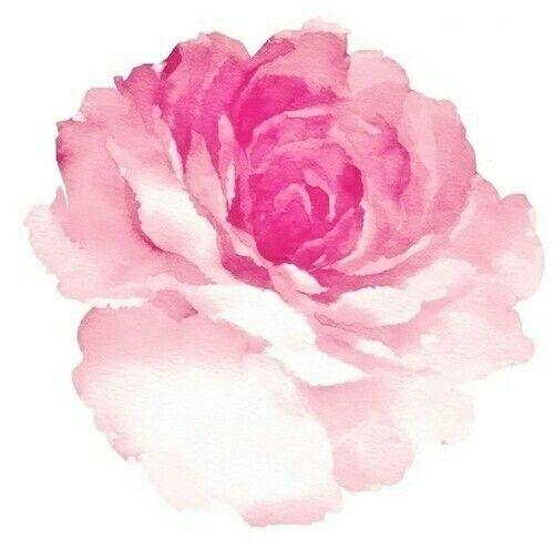 Watercolor Carnation Blomma Akvarell Akvarellkonst Akvarellmotiv