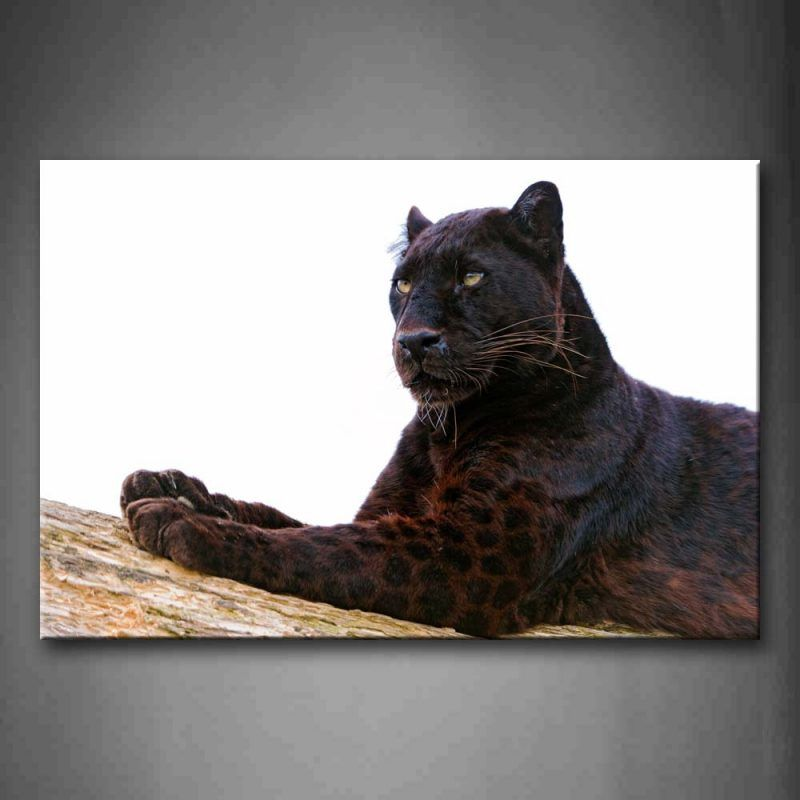 Jaguar Growling Panther Canvas Art Print By: Unframed Wall Art Pictures Black Panther Wood Canvas Print