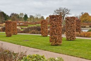 Beech columns and hedges at RHS Wisley | Garden design ...