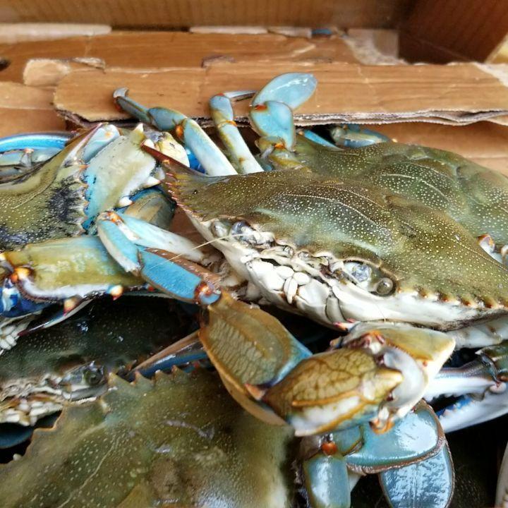 recipe: order live blue crabs online [10]