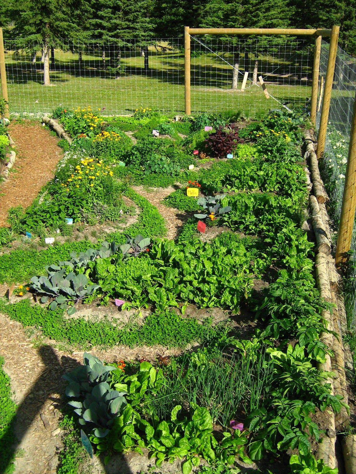 permaculture garden design | Dream Gardens | Pinterest ...