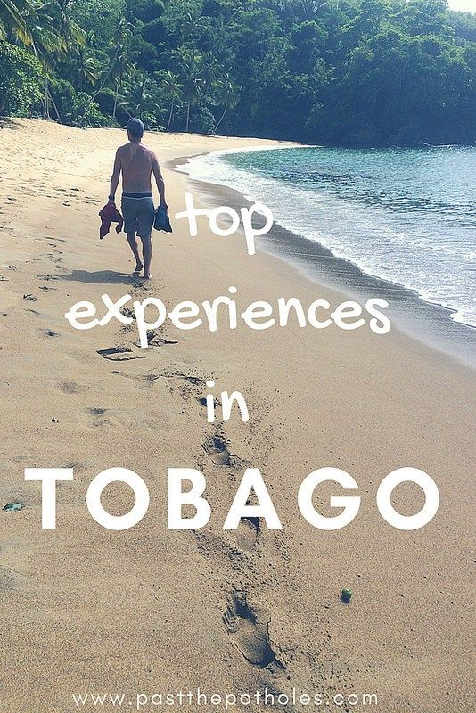 Top 10 things to do & see in Tobago   Tobago travel
