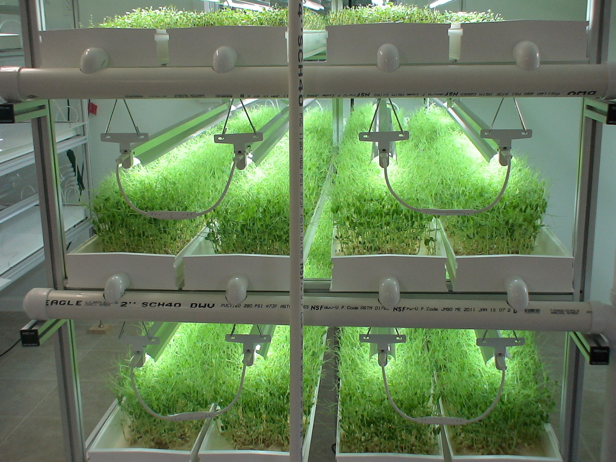 Microgreens in nft hydroponic system hydroponic systems for Best growing medium for microgreens