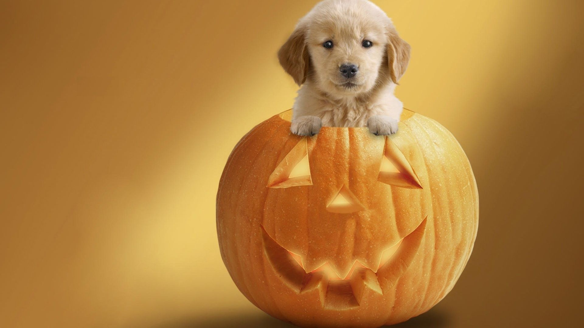 Halloween Dog Pics Halloween Dog Wallpaper Halloween Puppy Dog Halloween Cute Puppies