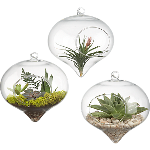 $7 each, Hanging Glass Terrarium, CB2 - Bring in some natural color! Use with air plants or succulents which are easy to care for and visually interesting.