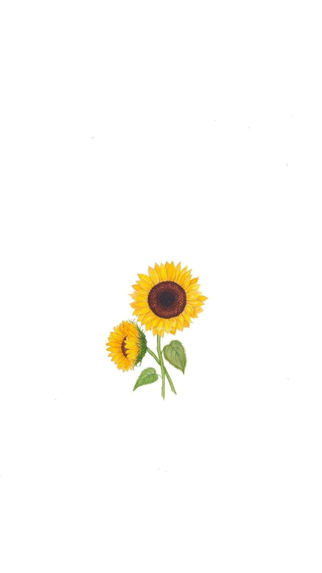 Idea by brooke' 😎 on backgrounds for iphone xr Sunflower