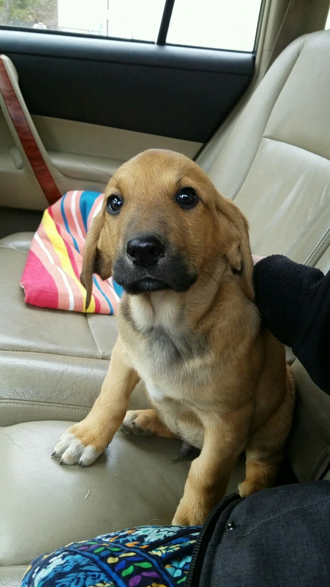 I picked up my new puppy this morning what should i name