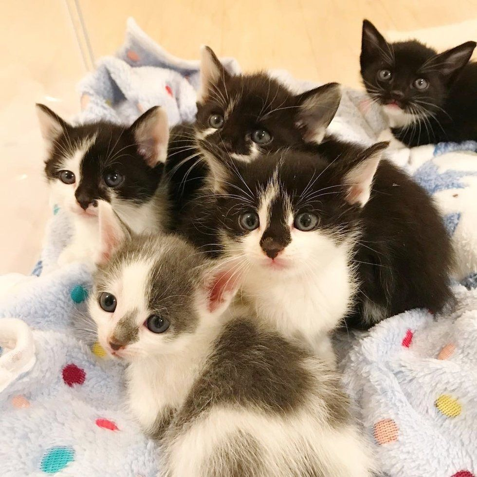 Stray Kittens Orphaned On The Street Stick Together Until Help Arrives Kittens Little Kittens Cat Care