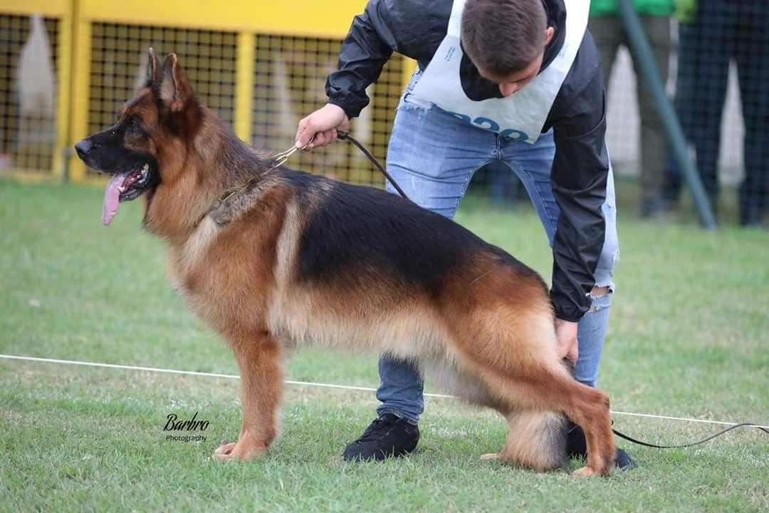 Va3 Italy 2019 Va14 Germany 2019 Finn Von Der Piste Trophe Dogs Animals