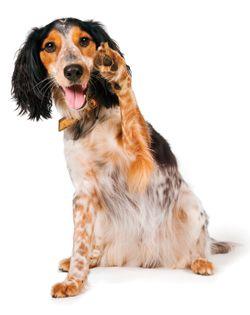 Teaching Your Dog New Tricks Dog Blog Your Dog Dog Adoption