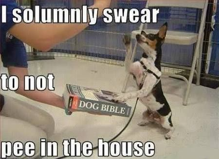Image result for dog humor