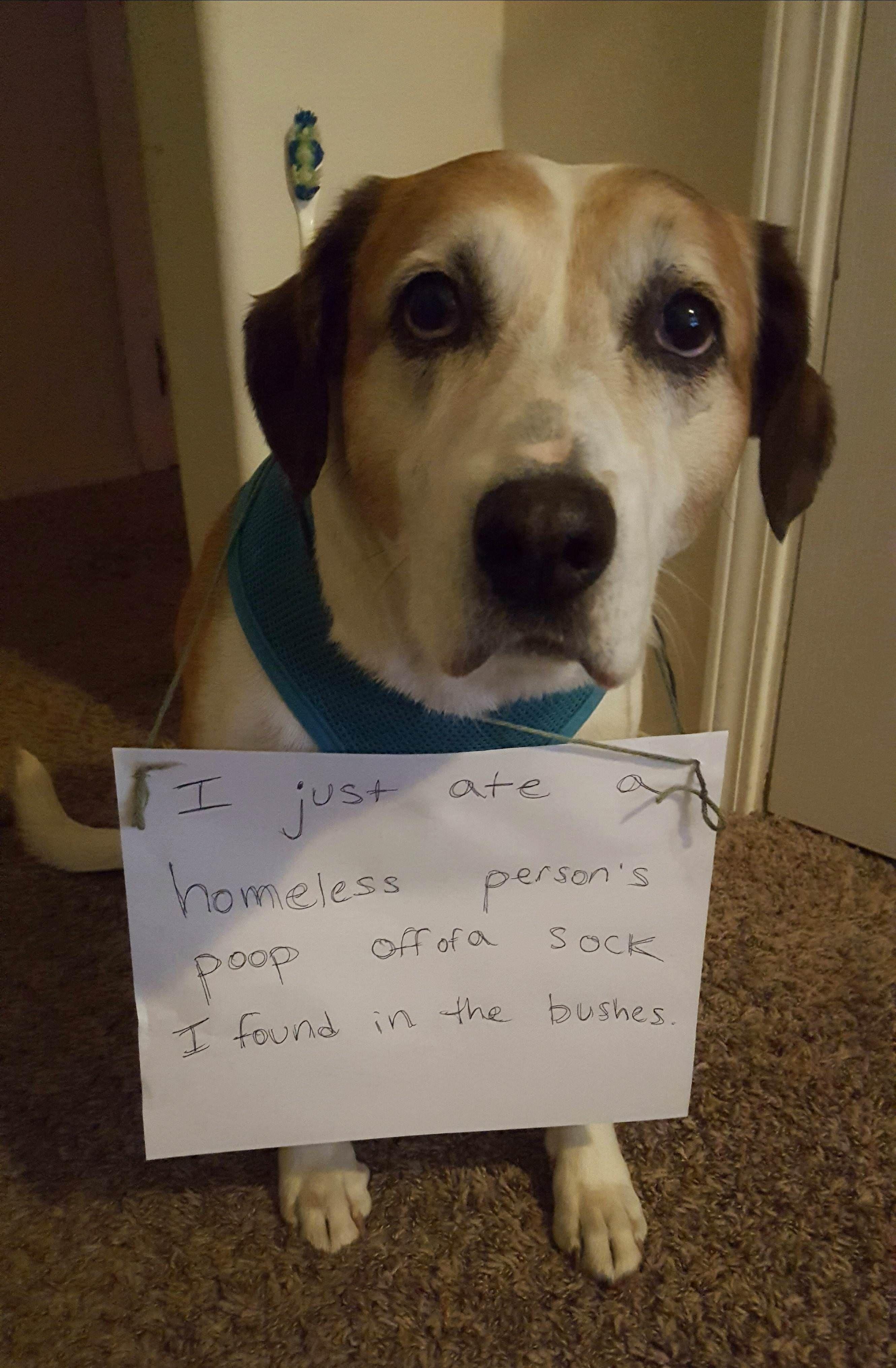 Idea By Lisa On Dog Shaming Dog Shaming Funny Animal Shaming Dogs