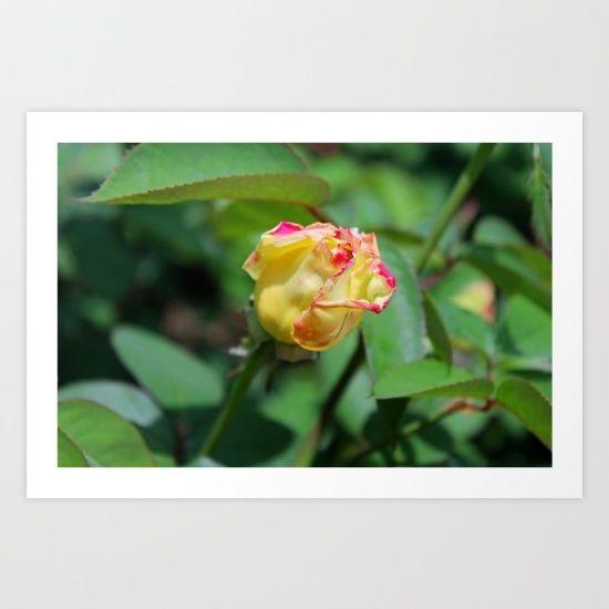 rose, bud, yellow, flowers, nature, bloom, blossom