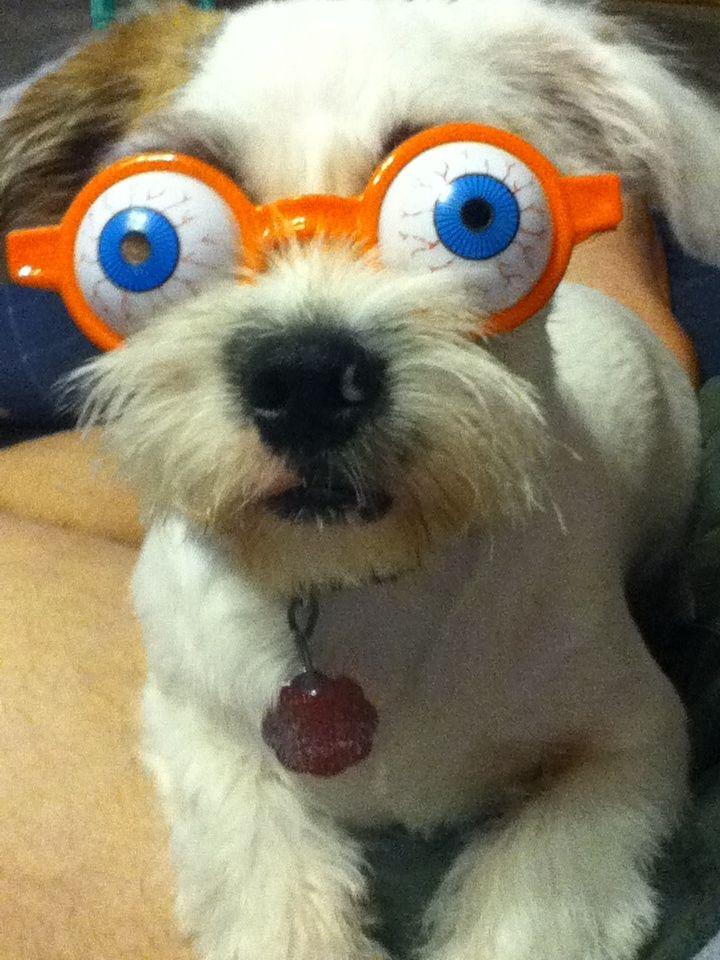 I'm awake!! I'm awake!!! Round sunglasses, Animals
