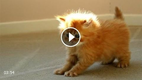 Image of: Dogs Funny Videos 2014 Funny Cats Video Funny Cat Videos Ever Funny Animals Funny Fails 2014 Pinterest Funny Videos 2014 Funny Cats Video Funny Cat Videos Ever Funny