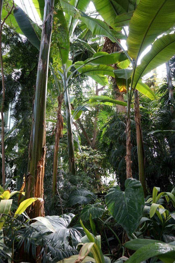 Balade tropicale sous les Grandes Serres du Jardin des