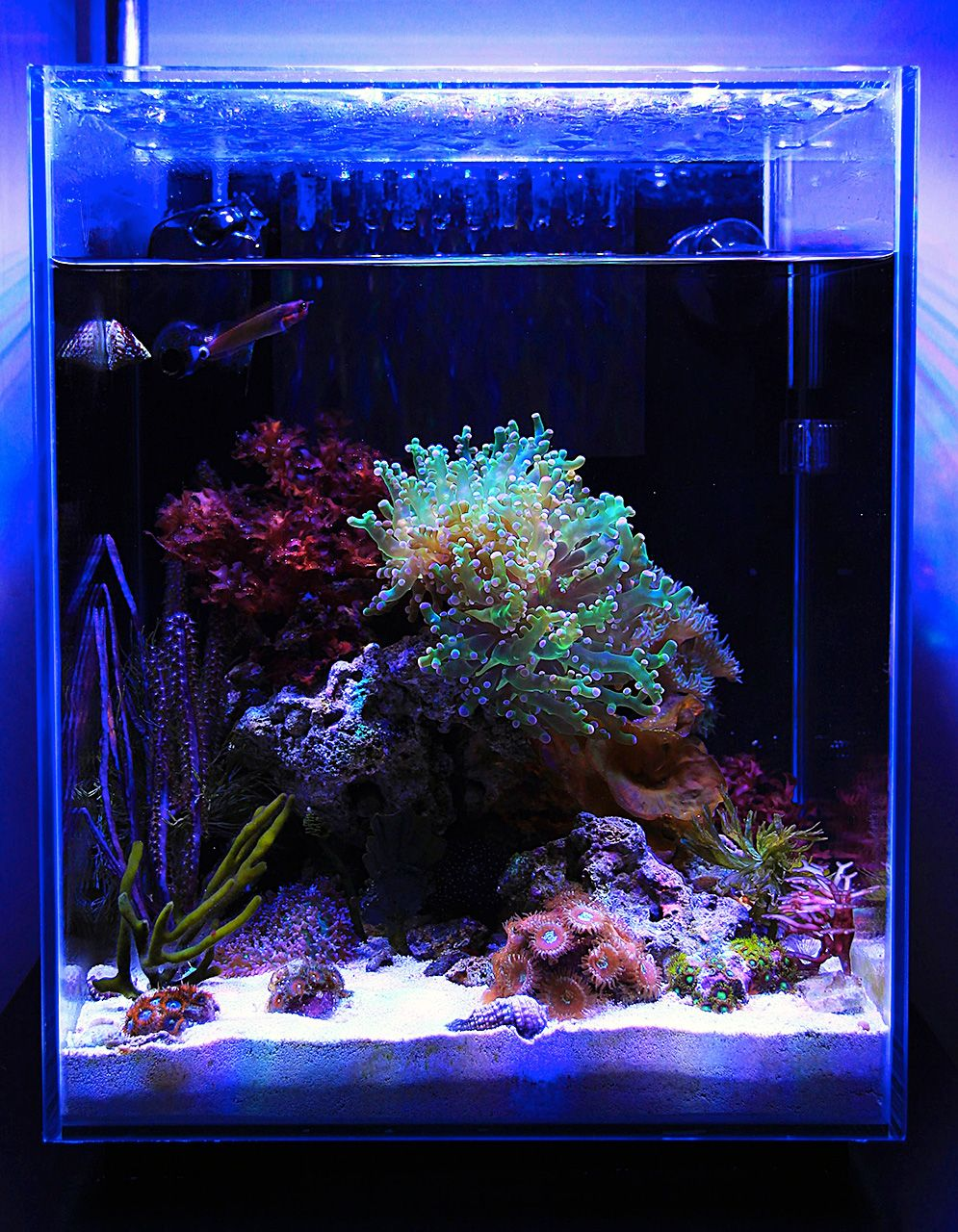Justind823 2014 Featured Nano Reefs Featured Aquariums Monthly Featured Nano Reef Aquarium Prof Saltwater Aquarium Fish Coral Reef Aquarium Reef Aquarium
