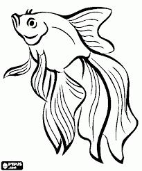 Imagini Pentru Desene Cu Cai Fish Coloring Page Fish Drawings Adult Coloring Pages