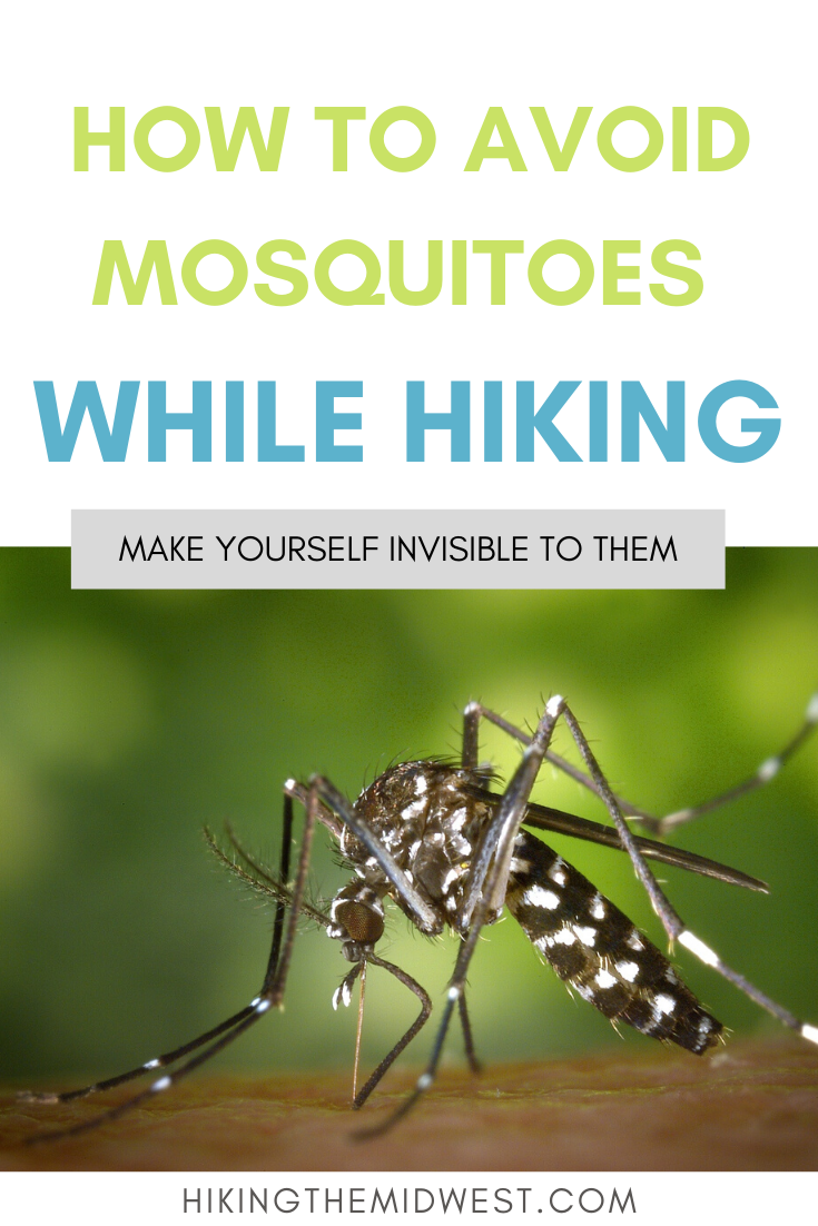 How To Avoid Mosquitoes in 2020   Backpacking trails ...