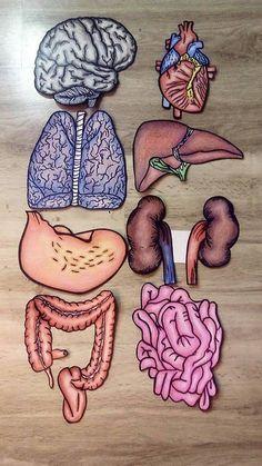 a kismedence belső szerveinek visszérfotói az alsó végtagok visszérének hagyományos kezelési módja