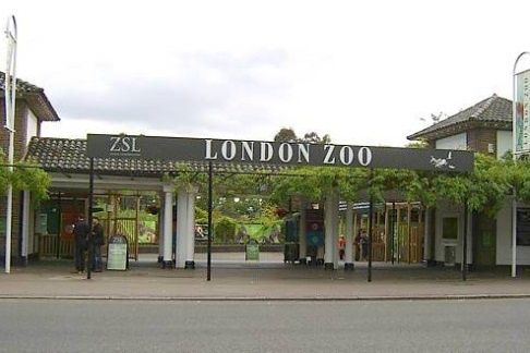 London zoo is the world's oldest zoo, intended for scientific and conservation…