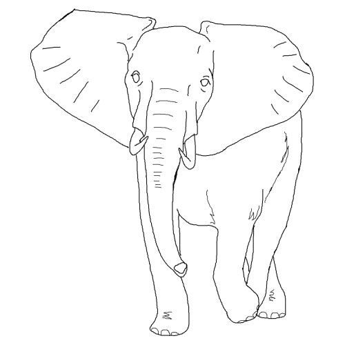 Amazing Elephant Coloring Pages Elephant Coloring Page Elephant