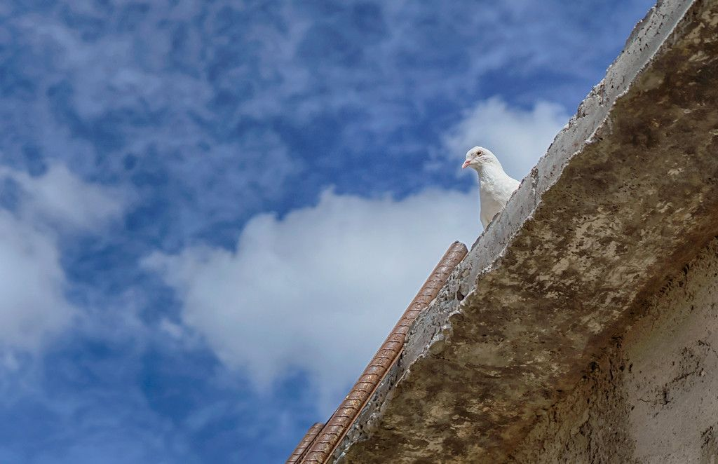'El Regalo De Mi Paloma Balance En Trinidad, Cuba' … The Gift Of My White Dove In Trinidad, Cuba'