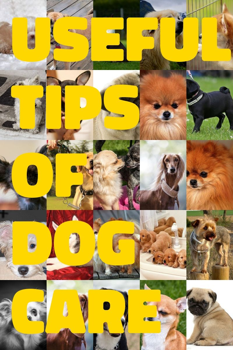 Do you own a dog read these tips dog lovers dog care