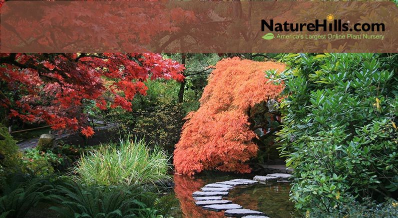 Benefits of biodiverse mixed plantings in 2020 with
