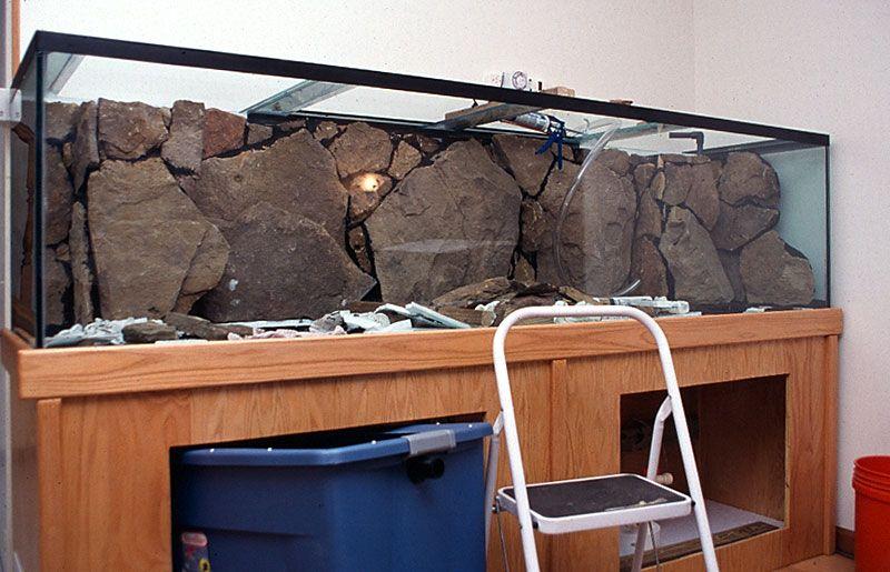 Fmueller Com Background Cichlid Aquarium Aquarium Backgrounds Turtle Aquarium