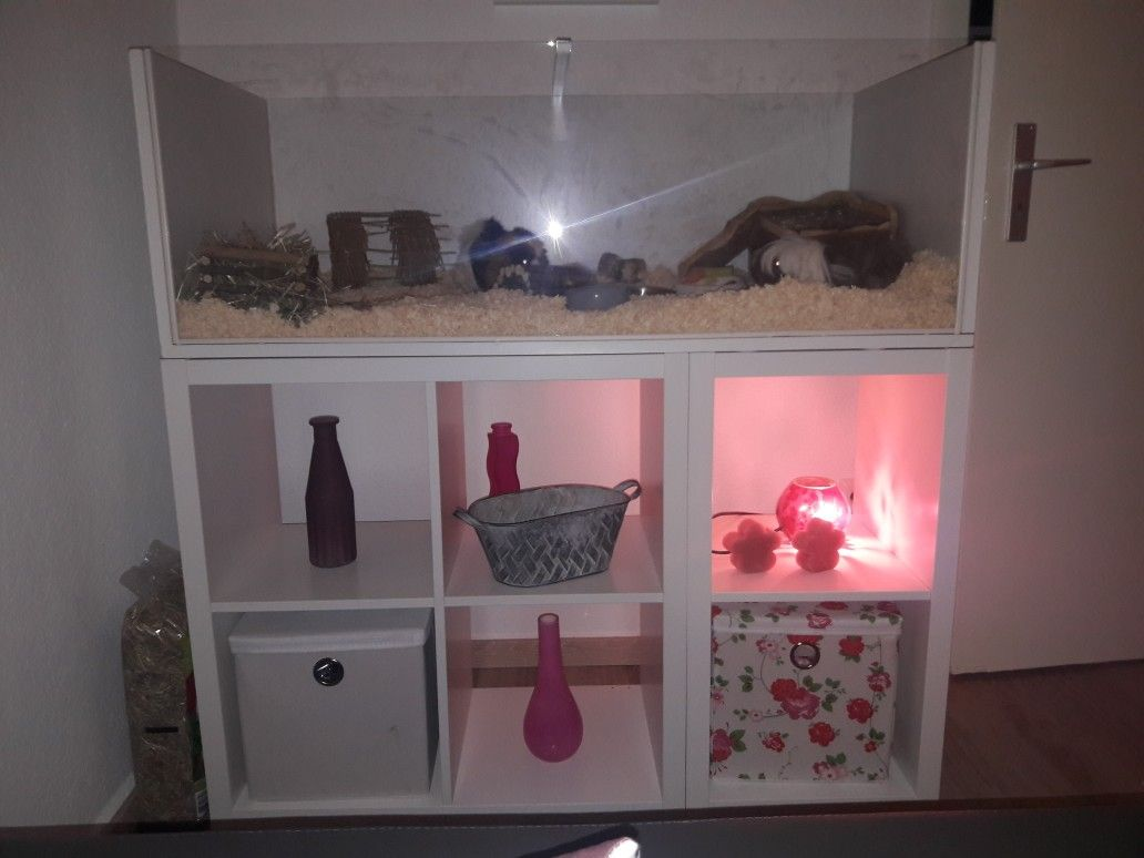 Meerschweinchen Eigenbau mit IKEA Regal Meerschweinchen