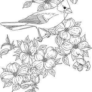 Cardinal Bird Cardinal Bird And Blossom Flower Coloring Page