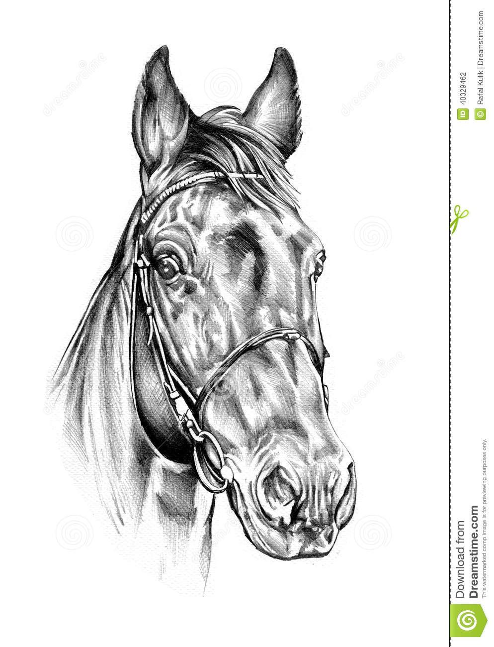 Freehand Horse Head Pencil Drawing Stock Illustration - Image ...
