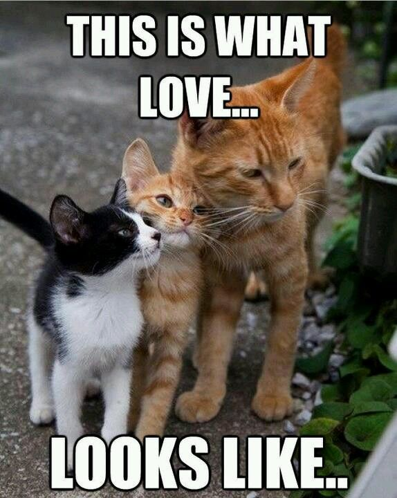 Lovely Family With Images Cute Animals Kittens Cutest Kittens