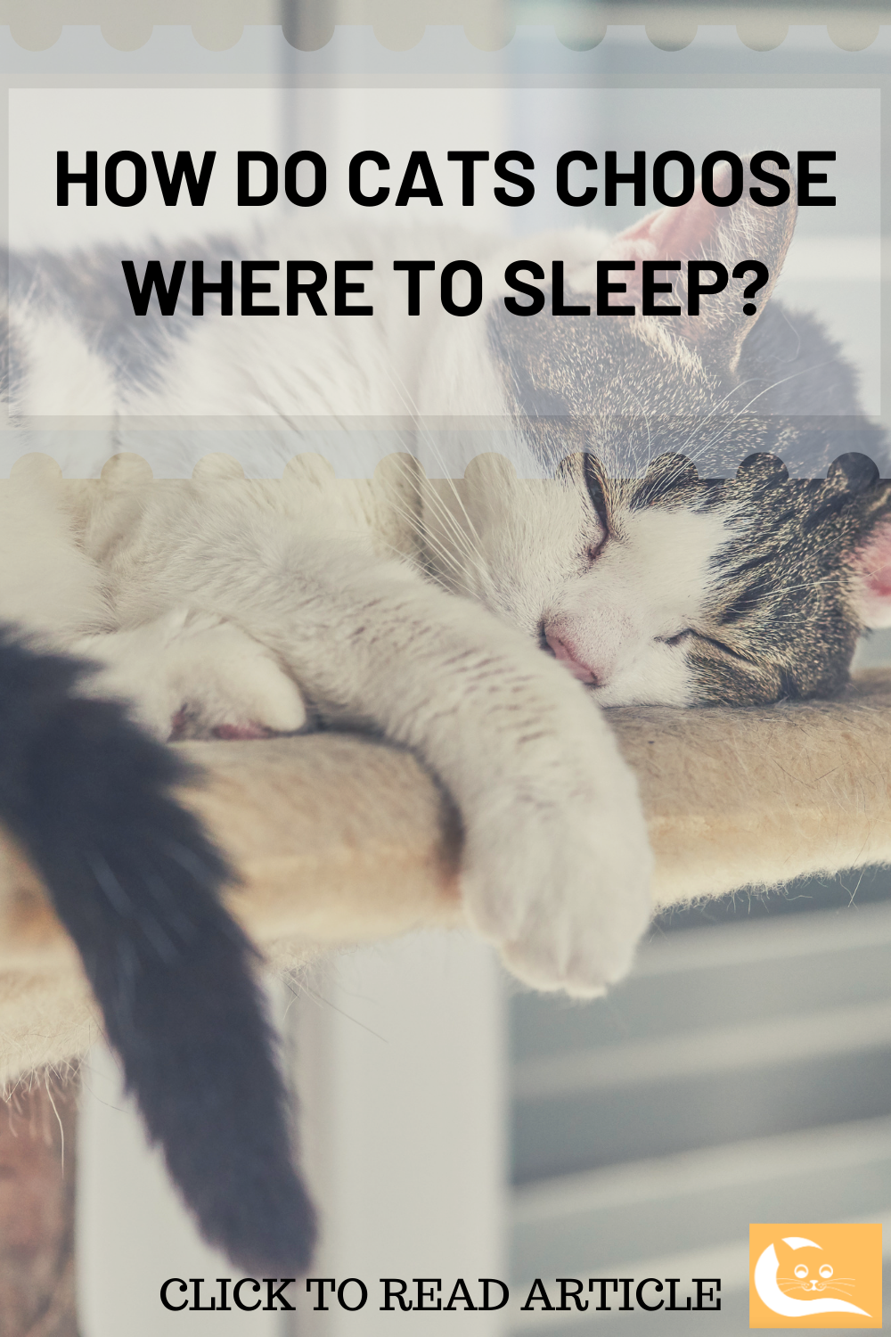 Places Where Cats Like To Sleep In 2020 Cats Cat Behavior Sleep