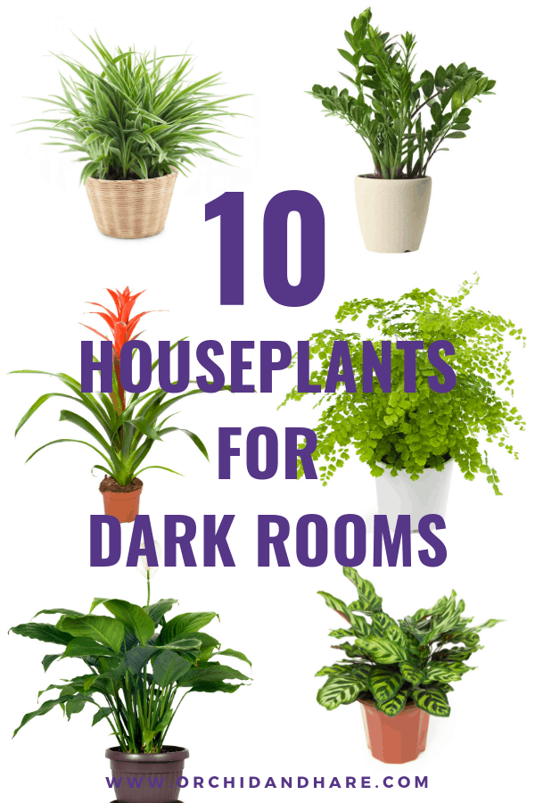 10 Best House Plants For Dark Rooms Find Out Which Are The Best Indoor Plants For Low Light In 2020 Low Light House Plants Easy House Plants Indoor Plants Low Light