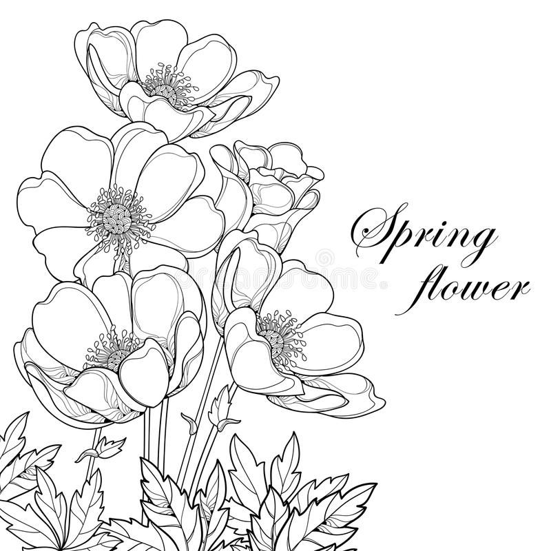 Vector Bouquet With Outline Anemone Flower Or Windflower Bud And Leaves Isolate Affiliate Anemo Flower Drawing Flower Bouquet Drawing Flower Illustration