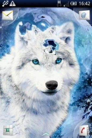 Free Moving Wolf Wallpaper