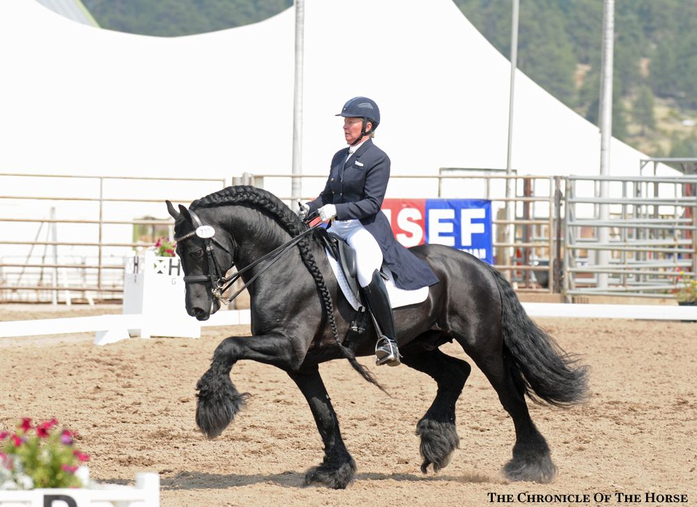 Friesian Dressage Considered Today As A Quot Light Draft Quot For
