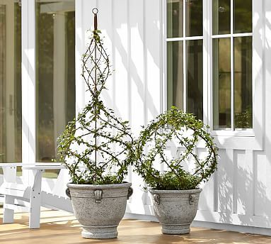 Live Ivy Spiral Topiary Potterybarn Garden Topiary