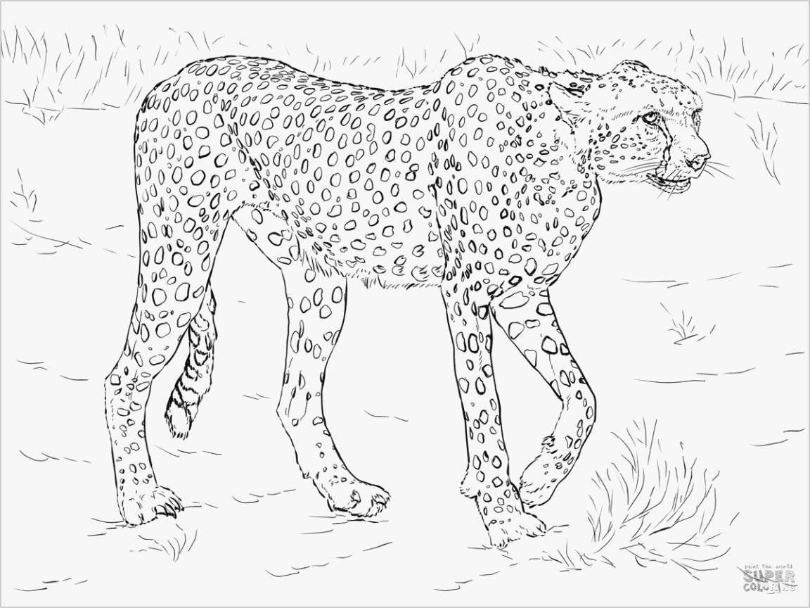 Pin By Rachelle Minks On Coloring Pages Animals Bird Coloring Pages Animal Coloring Pages Cute Coloring Pages