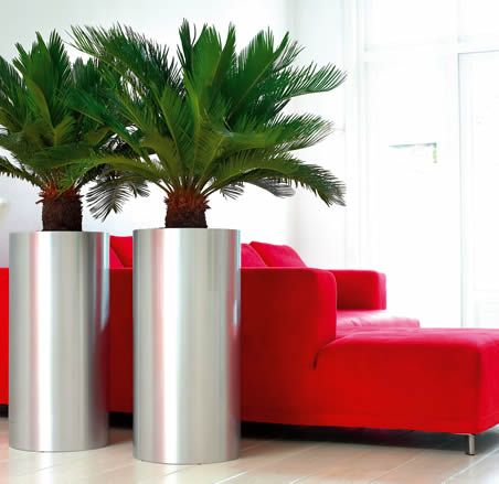 Interior landscaping from ambius for offices